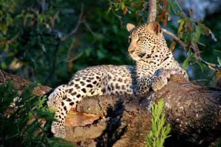 Leopard Nkorho - Graphic Design - Nelspruit and White River, Mpumalanga